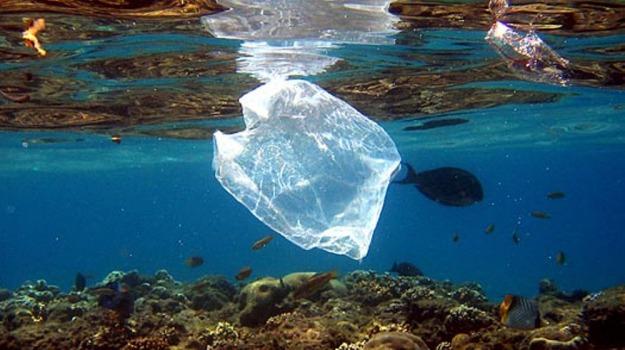 divieto plastica salina, Messina, Società