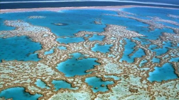 grande barriera corallina australiana, turisti, Sicilia, Società