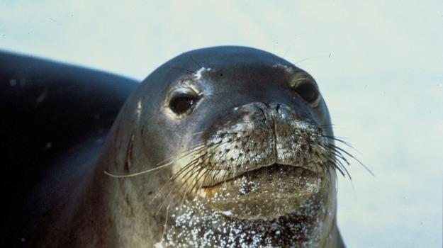 Egadi, foca monaca, Trapani, Vita