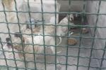 Bimbo sbranato dal cane a Mascalucia, madre condannata a 18 mesi per omicidio colposo