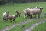 Agricoltura in crisi, il presidente Musumeci incontra gli allevatori a Enna