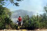 """Incendi in Sicilia, l'esperto: """"Si punti alla selvicoltura"""""""