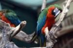 Villa D'Orleans a Palermo, si cercano regionali per badare a pappagalli e fenicotteri