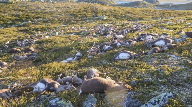 Norvegia, oslo, renne, Sicilia, Mondo