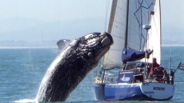animali, balene, Sicilia, Società