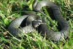 Canicattì, bimba di 10 anni morsa da un serpente