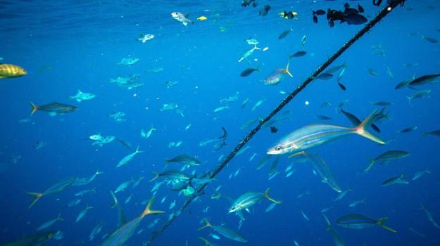 batteri, oceani, Sicilia, Società
