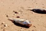 Moria di pesci alla foce del Platani, l'esperto rassicura: il mare gode di ottima salute
