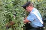 Coltivavano marijuana, 3 arresti tra Calstelvetrano e Campobello