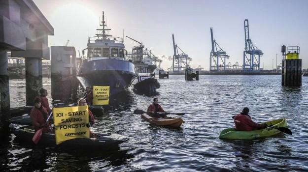 Greenpeace, olio di palma, Rotterdam, Sicilia, Mondo