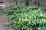 Marijuana nascosta tra i fagiolini: un arresto a Gela