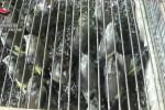 Catturava uccellini per venderli, denunciato un 40enne palermitano