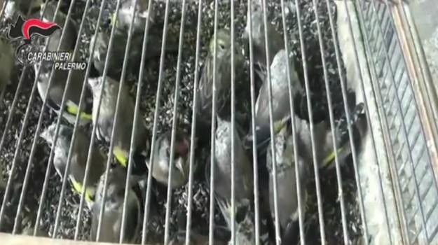 denuncia, uccellini, Palermo, Cronaca