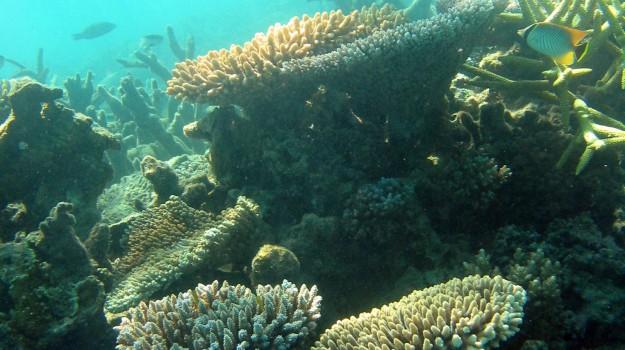 grande barriera corallina, sbiancamento, Sicilia, Vita