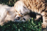 Terremoto, ecco come aiutare gli animali domestici ad affrontarlo