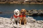 Addio a Merlino, si è spento il cane eroe che ha salvato sette bagnanti a Terrasini - Foto