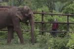 Primato per gli elefanti: riescono a stare svegli fino a 46 ore di fila