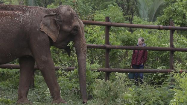 elefanti, primato, Sicilia, Società