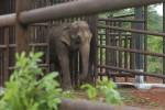 Elefanti da circo, in Brasile la prima area per esemplari in pensione