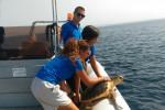 Favignana, liberati altri due esemplari di tartaruga Caretta caretta - Foto
