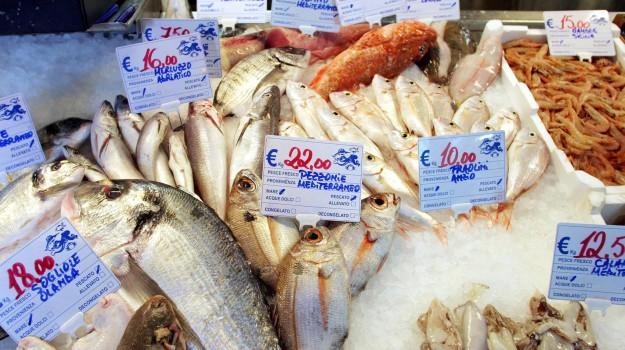 FEDERCOOPESCA, Maltempo, prezzi pesci, Sicilia, Economia