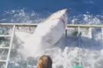 Paura in Messico, squalo entra nella gabbia dei turisti: il video