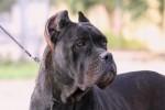 Cani padronali senza microchip a Caltanissetta, elevate 13 multe in una settimana