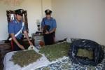 Palermo, piantagione di cannabis in una casa vicina al fiume Oreto