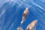 """Delfini, tartarughe e capodogli avvistati nel mare delle Eolie: """"Gli manca il cibo"""""""