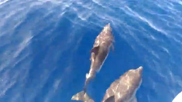 invasione delfini eolie, lipari, sciopero pescatori eolie, Messina, Cronaca