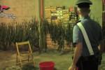 Droga a Falsomiele, sequestrato un garage con 13 kg di cannabis: 3 arresti - Le immagini