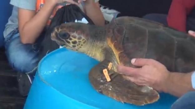 La tartaruga Elisa liberata a Capo Gallo