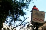 A Palermo 200 alberi sono da abbattere: interventi al via