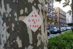 """""""I am only a tree"""", arte a Palermo: fazzoletti sui tronchi di via Libertà"""