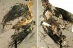 Trovate le più antiche tracce di pelle: sono di un volatile vissuto 130 milioni di anni fa