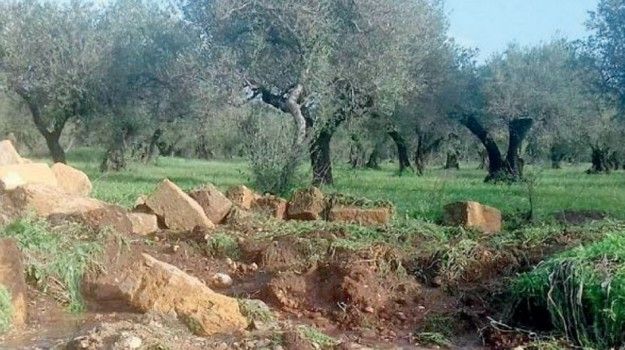 agrumi, aranceti, Maltempo, ribera, Agrigento, Cronaca, Cronache dell'agricoltura