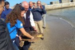 Liberate in mare a Palermo due caretta caretta