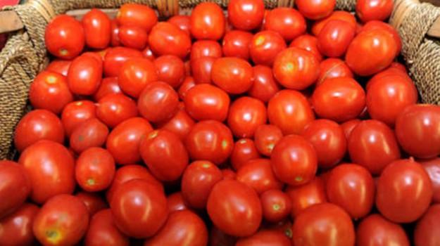 Datterino, igp, Pachino, Siracusa, Cronache dell'agricoltura, Economia
