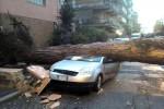 Un albero su un'auto: uno dei danni causati dalla tromba d'aria a Ladispoli (RM) - Fonte Ansa