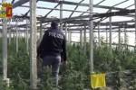 Coltivazione di cannabis con oltre 7 mila piante ad Acate, un arresto