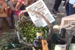 Dalla raccolta e alla frangitura delle olive: studenti palermitani scoprono i segreti dell'olio - Video