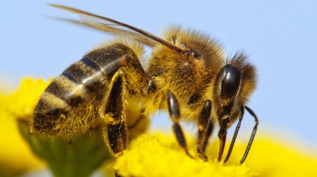 assalito dalle vespe, morto floridia assalito dalle vespe, Siracusa, Cronaca