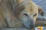 Microchip per i cani in centro storico a Catania