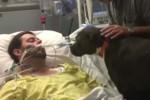 Cane al capezzale del suo padrone in fin di vita: il video dell'ultimo saluto