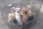 A Palermo cani adottati con i contributi del Comune