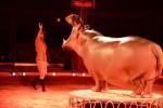 Dopo 25 anni, torna in Sicilia il Royal Circus: show a Palermo