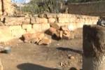 """Tempio di Ercole ad Agrigento, inizia la """"terapia"""""""