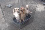 San Cataldo, tre cuccioli e la loro mamma abbandonati la notte di San Silvestro