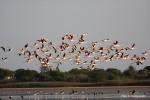L'oasi siciliana dei Pantani comprata dai tedeschi, 250 specie salvate dalle donazioni