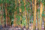 Con il Giornale di Sicilia l'agenda verde con le foto più belle dell'Orto botanico